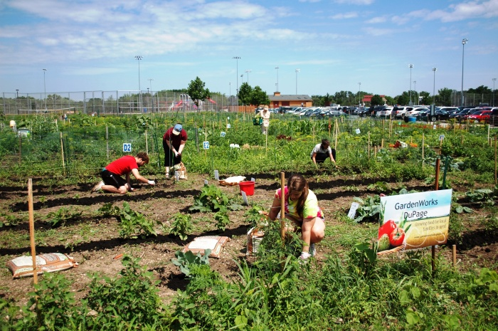 Once you've gotten started, developing the land for the garden is the next step.