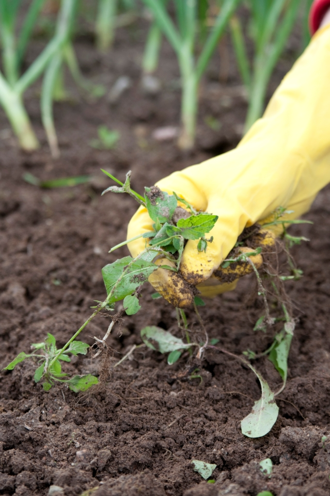 Watering, weeding, and trimming are basics in garden maintenance.
