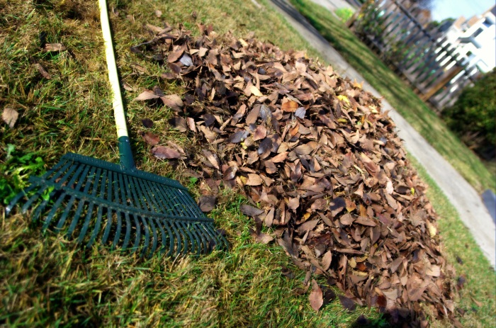 Whenever you see a bunch of leaves, get a rake and gather them into a compost!